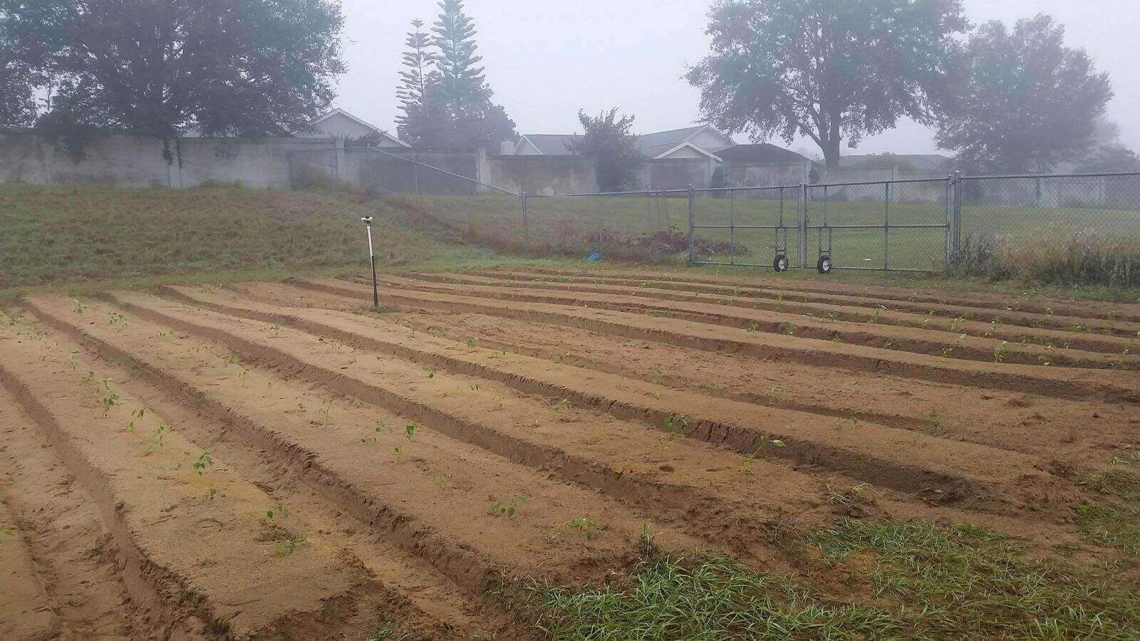 East Ridge High School Organic Edible Garden — Clermont Garden Club