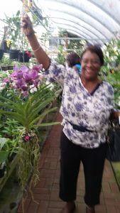 Carol orchid