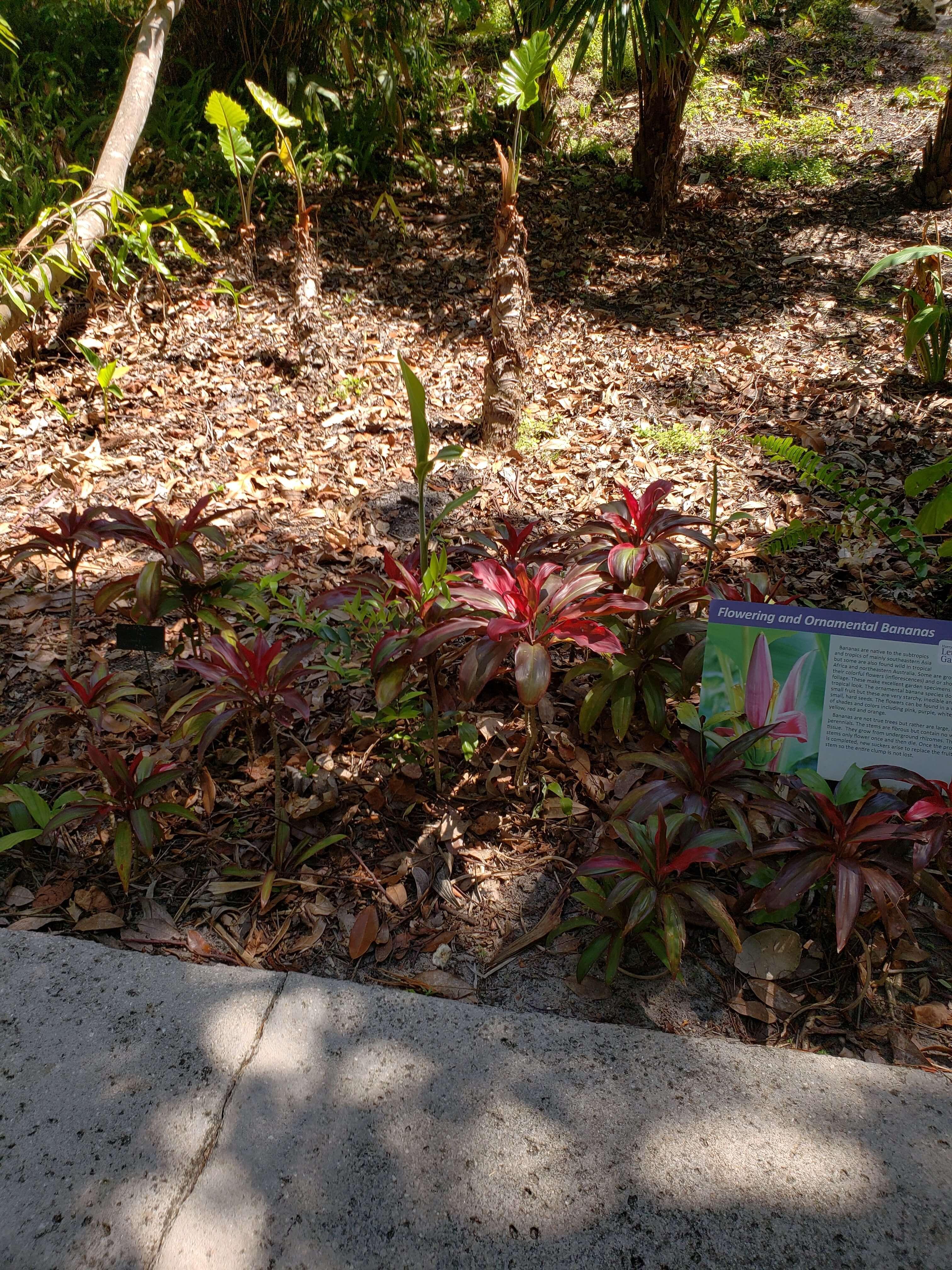 Wonderful Leu Gardens Field Trip — Clermont Garden Club